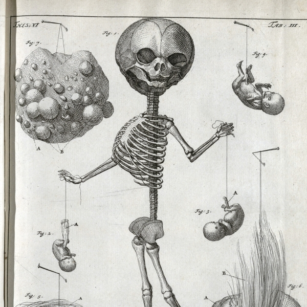 27.Ruysch, Thesaurus Anatomicus _06_0.jpeg