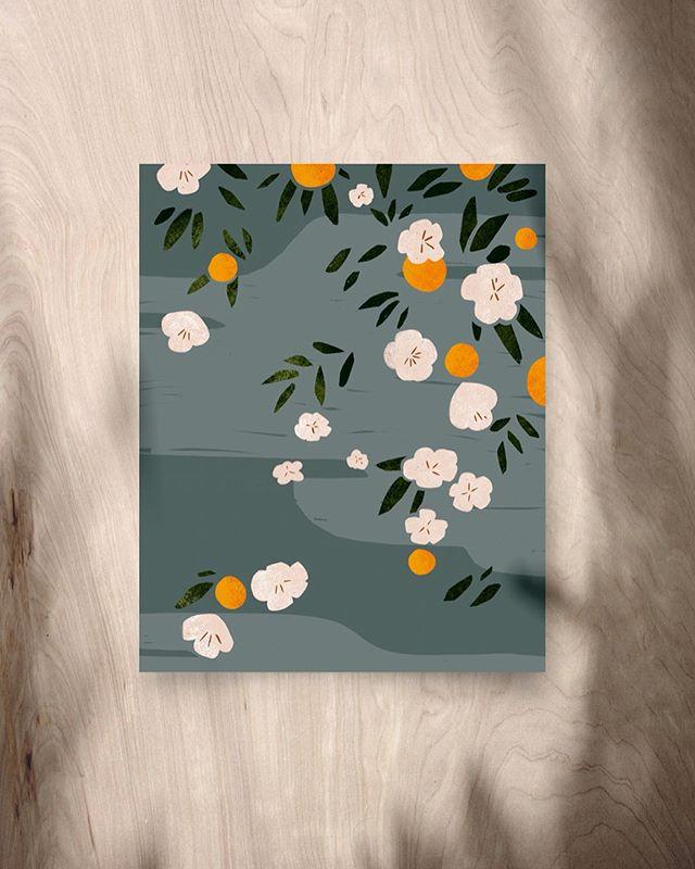 Orange blossoms 🍊🌿