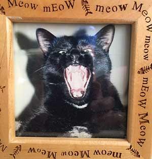 Persist-a-Cat