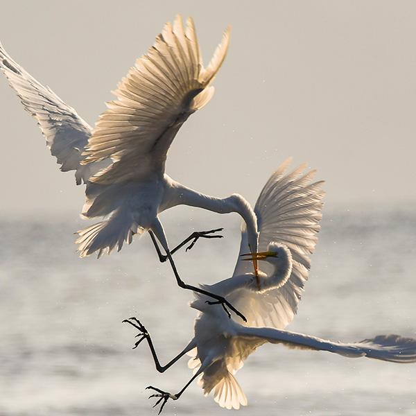 competing-birds.jpg