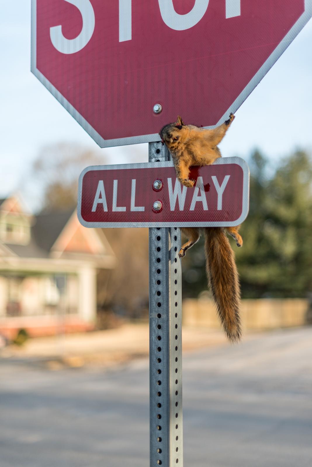 Squirrel Crucifixion, Carlisle, Indiana, 2017