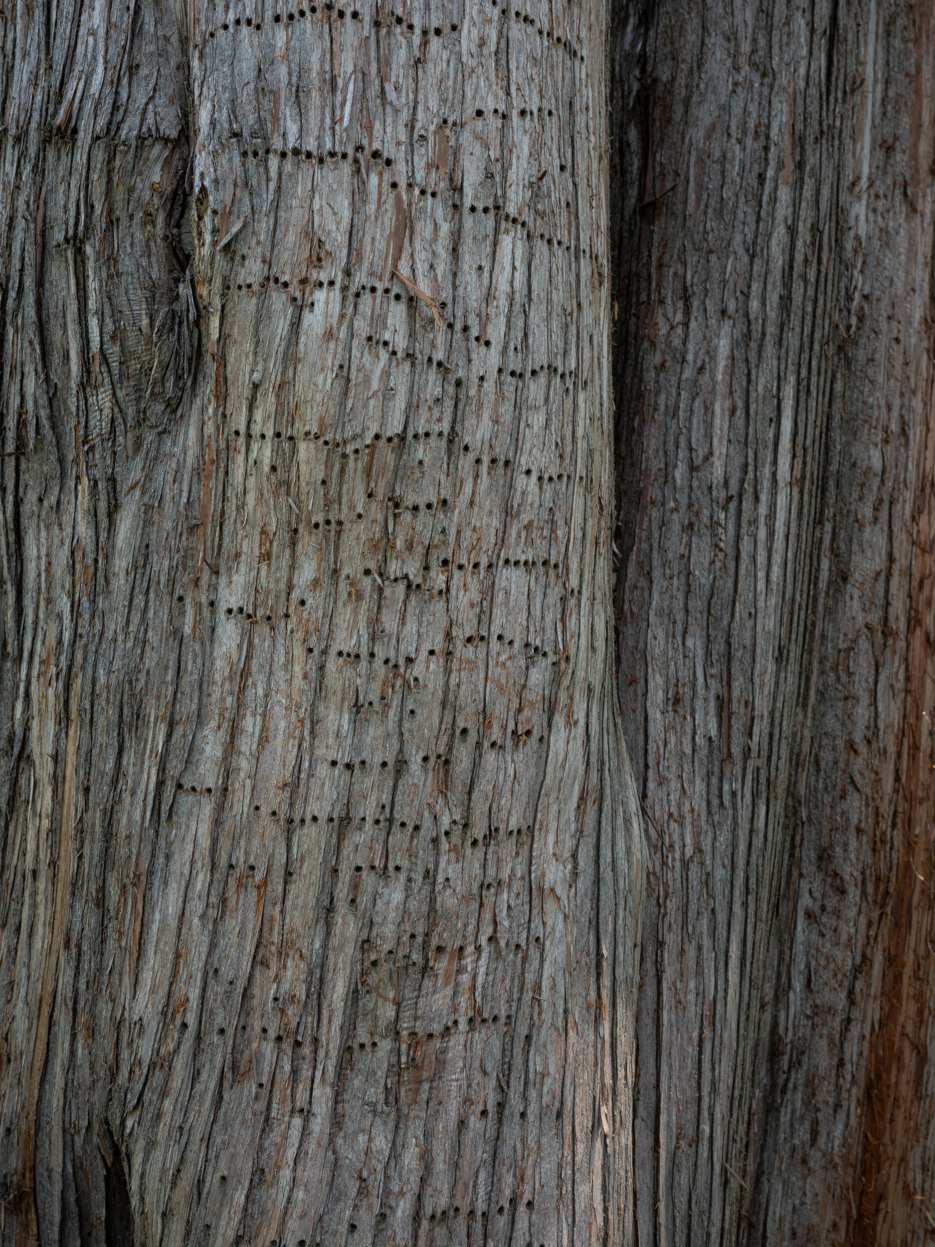 Woodpecker Trails, Waterford, Virginia, 2019