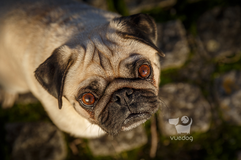 Vue.Dog | Dog Photography | Choose The Right Pet Photographer For You