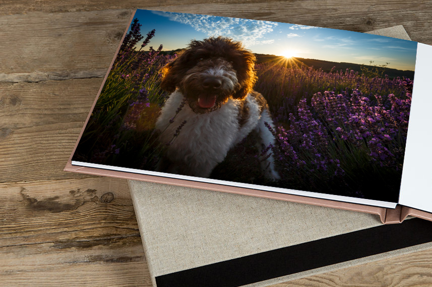 Vue.Dog | Dog Photography | Fine Art Solutions For Your Home That Make Your Dog Look Cool.