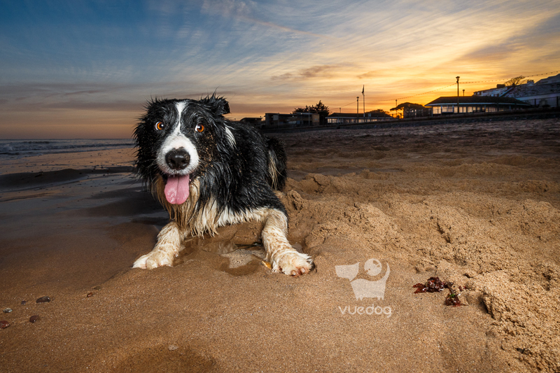 Vue.Dog | Dog Photography | Car Travel With Dogs Advice