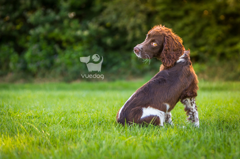 Vue.Dog   Dog Photography   70-200mm f2.8   Choosing the best lens for pet photography