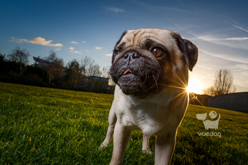 Vue.Dog   Dog Photography   16-35mm f4   Choosing the best lens for pet photography