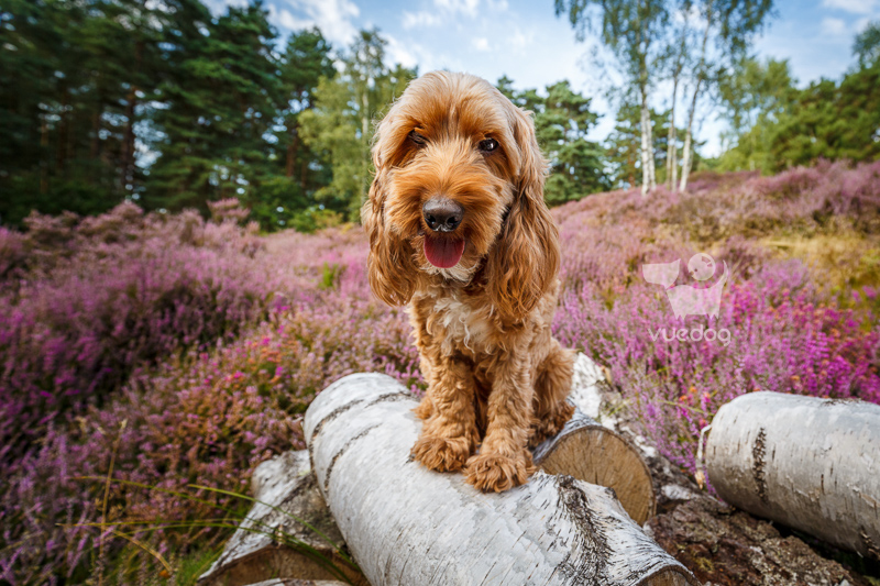 Vue.Dog | Dog Photography | My Most Frequently Asked Dog Photo Session Questions