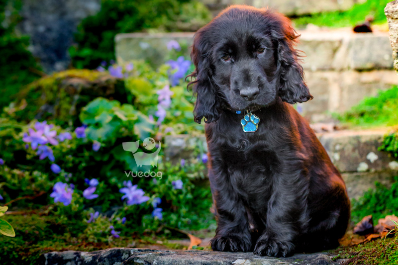 Vue.Dog | Dog Photography | Looking After A Puppy