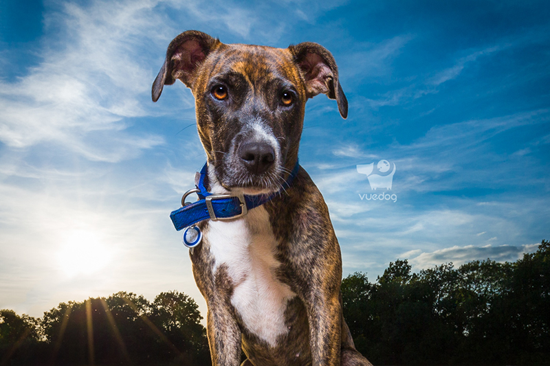 Vue.Dog   Dog Photography   How to keep your dog safe
