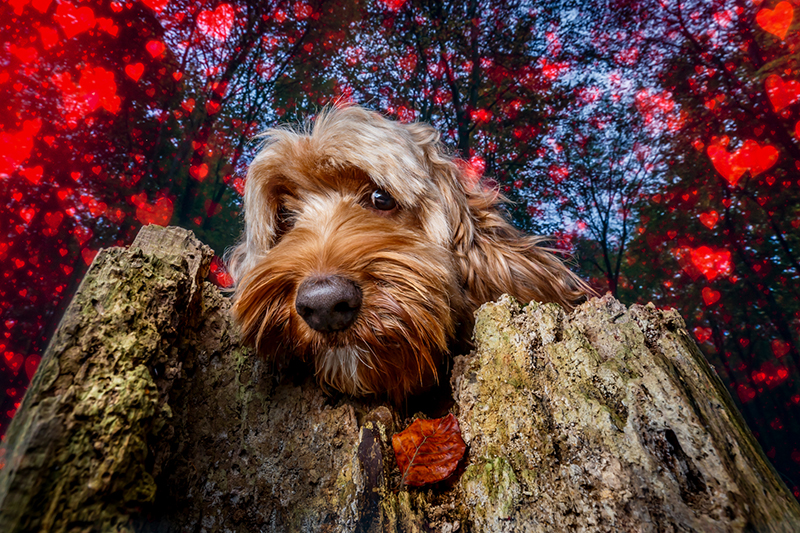 Vue.Dog | Dog Photography | Spread the love on Valentine's week