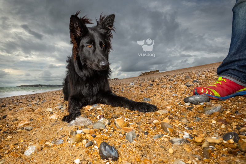 Dog Photography by Andrew Sproule of Vue.Dog