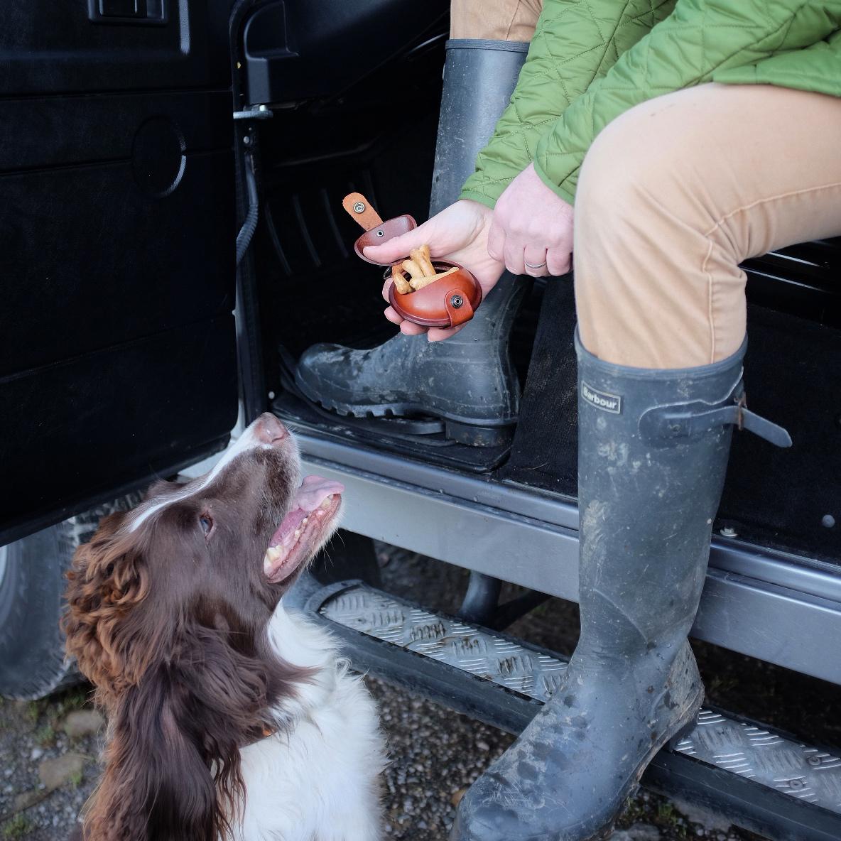 springer-waiting-for-treat-from-dogpod.jpg
