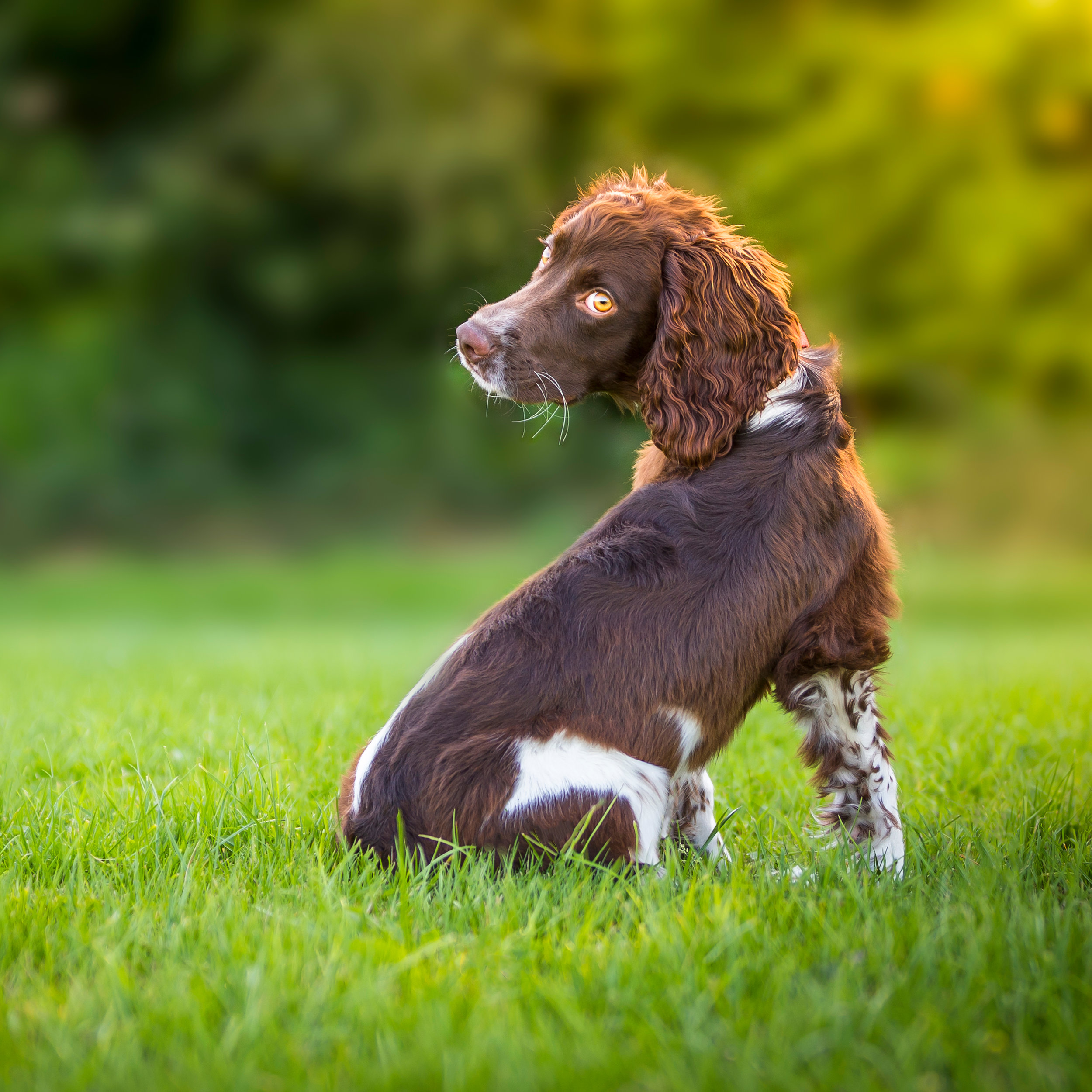 TOP TIPS // DOG SAFETY THIS SUMMER - DOG WELFARE
