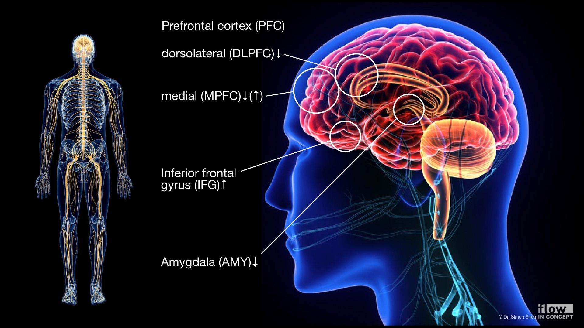 Im flow-Zustand zeigen sich interessante Veränderungen in der Aktivität des Gehirns.