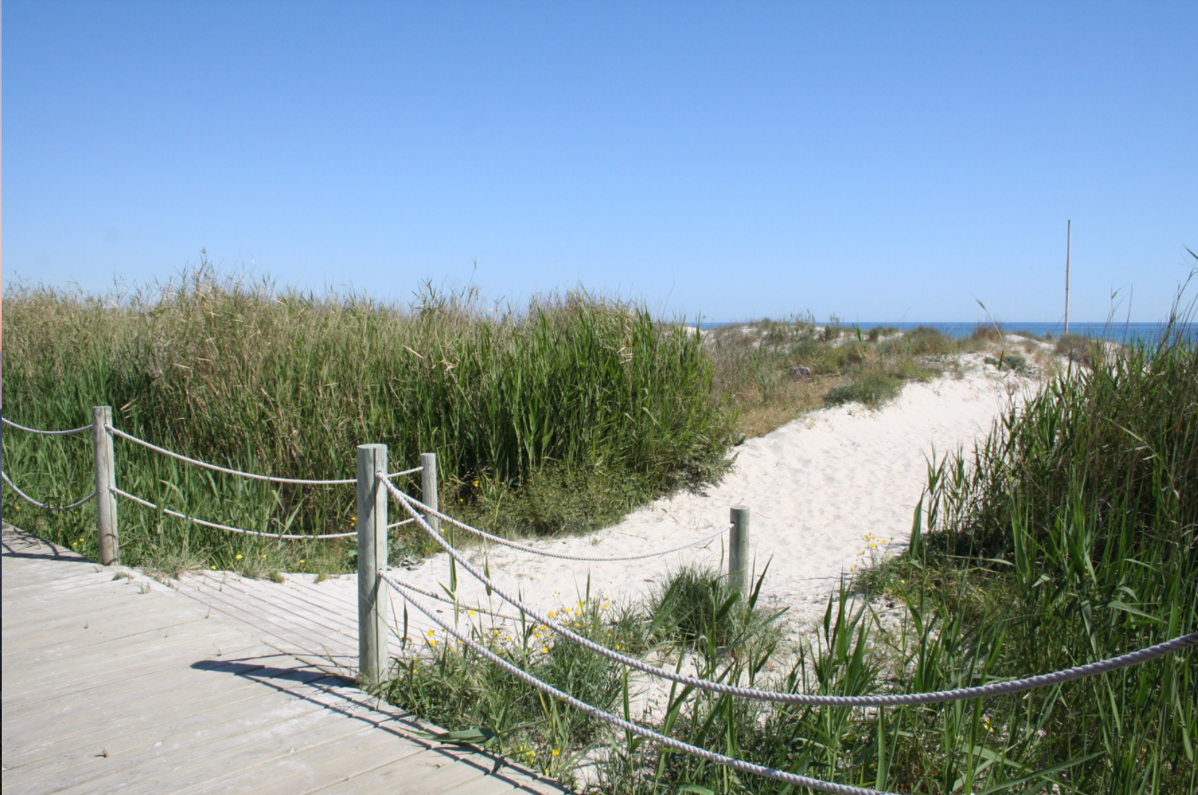 Surrounding area beach.png