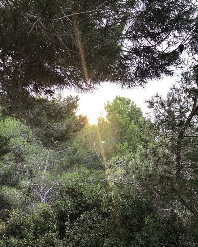 Good Morning Sunshine  @yogaconinma  @leannedaggeryoga  #goodmorning #hellofromretreat #yogaretreat #viewsfromthemat #retreat #sunshineandglow #spain #view #sunshine