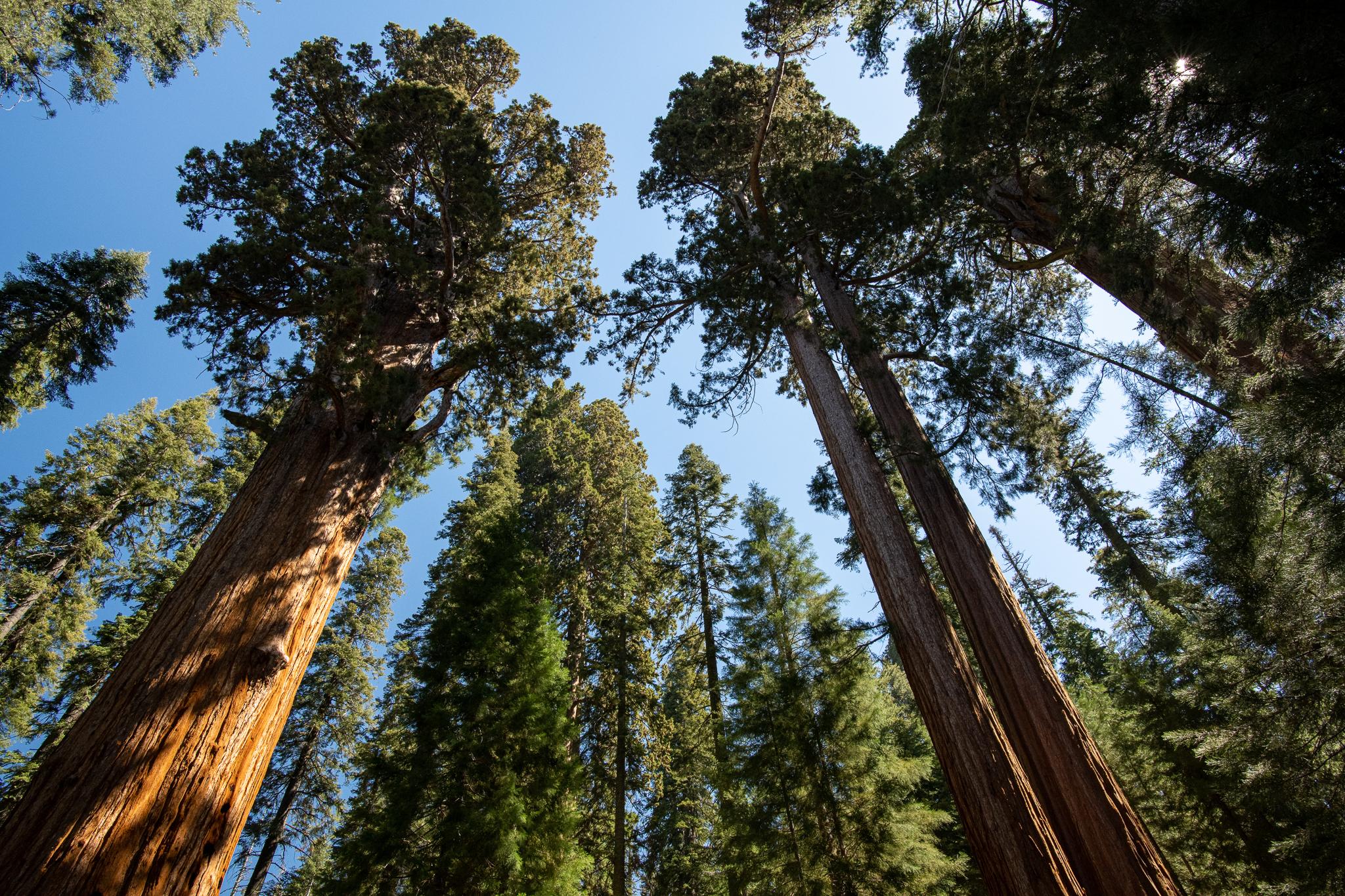 Yosemite-4594.jpg