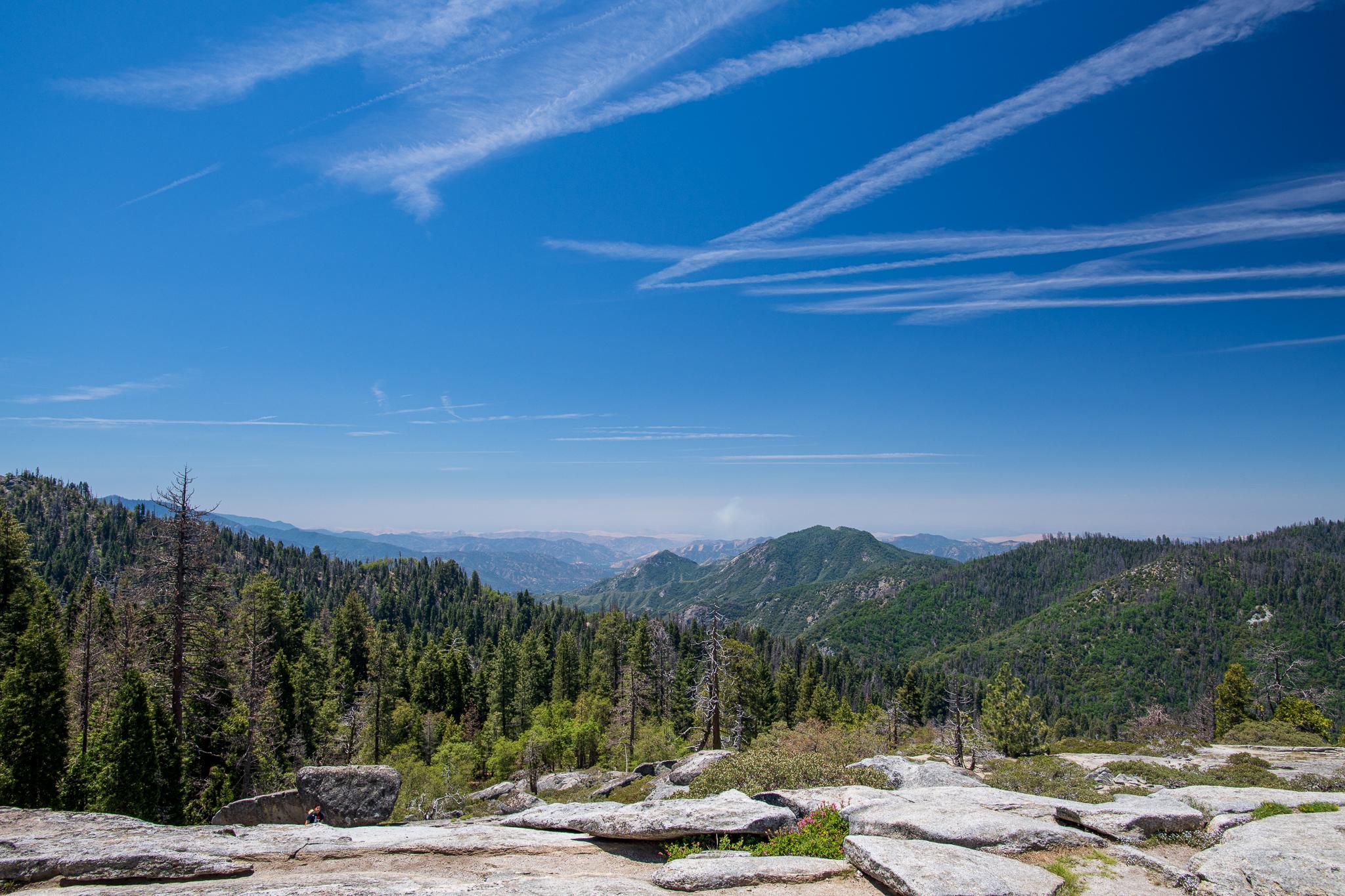Sequoia-4691.jpg