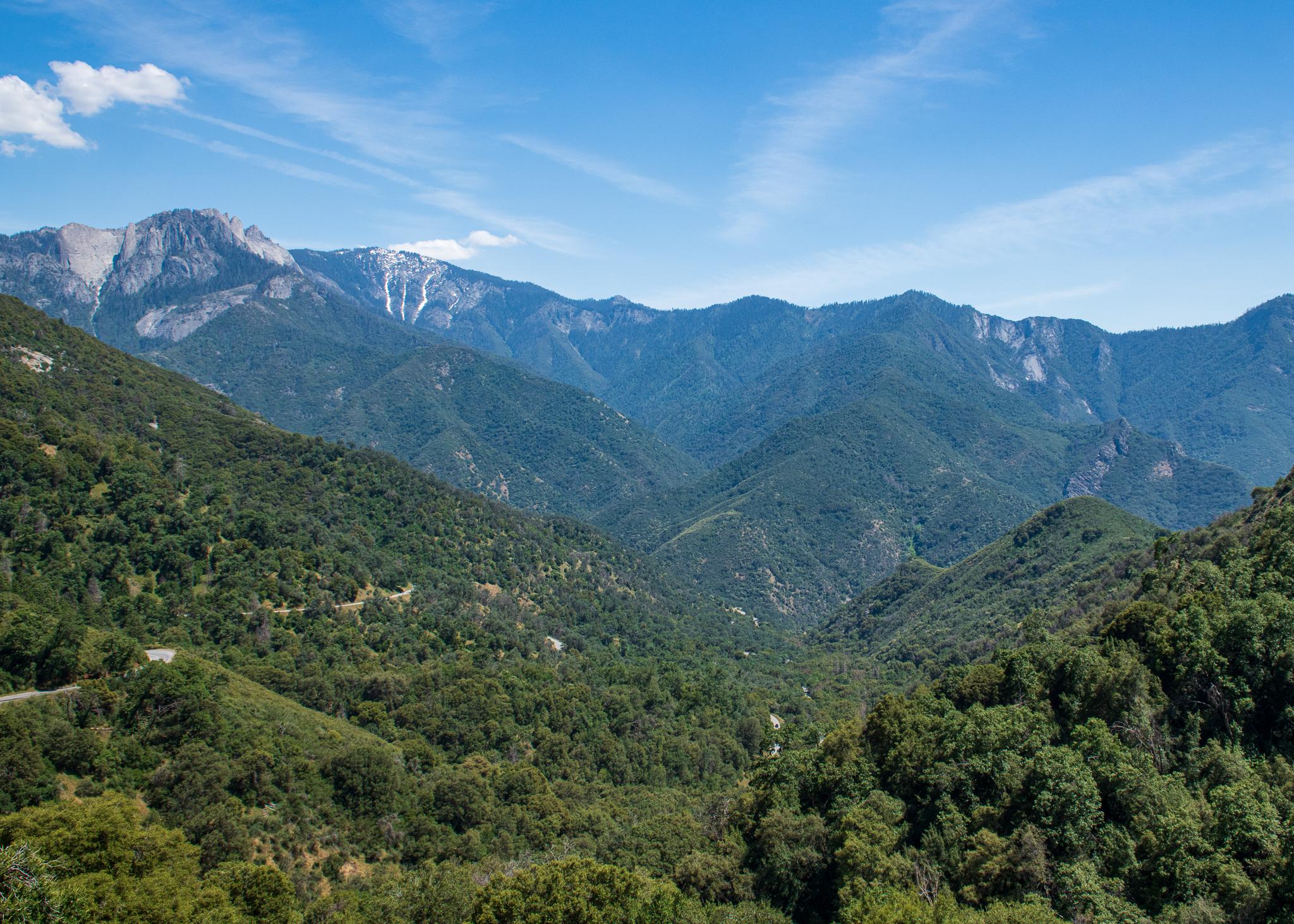 Sequoia-4778.jpg