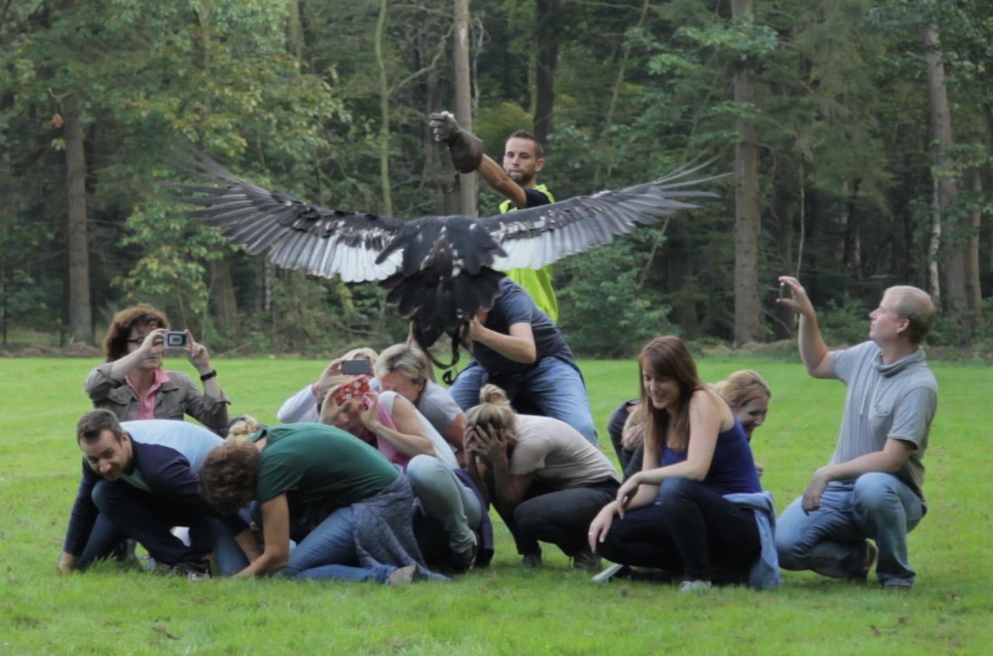 Teambuilding met roofvogels BuitenBusiness (21).jpg