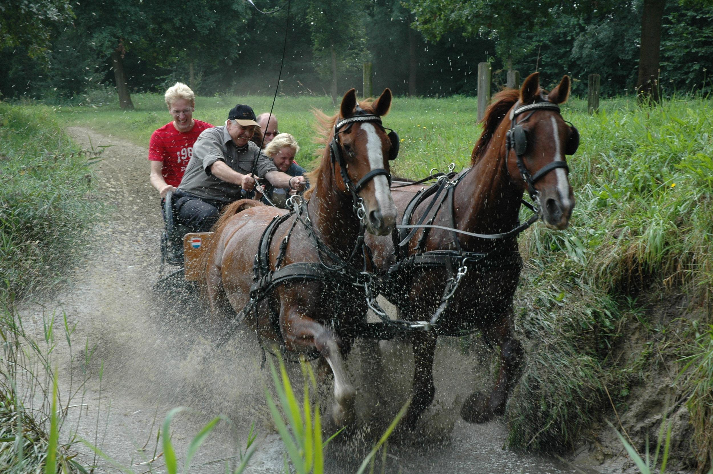 Paarden mennen BuitenBusiness (18).jpg