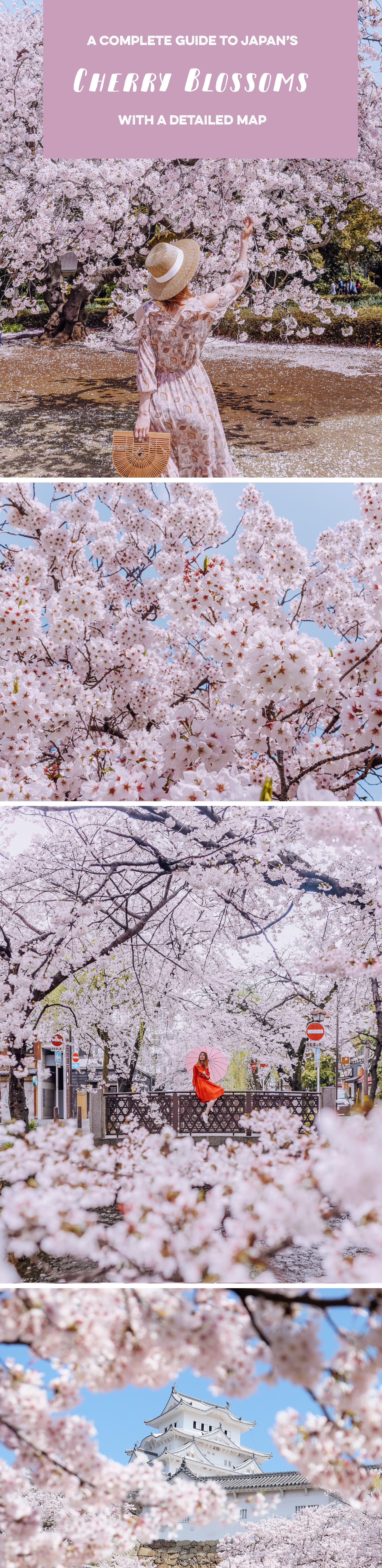 japan-cherry-blossom-guide1.jpg