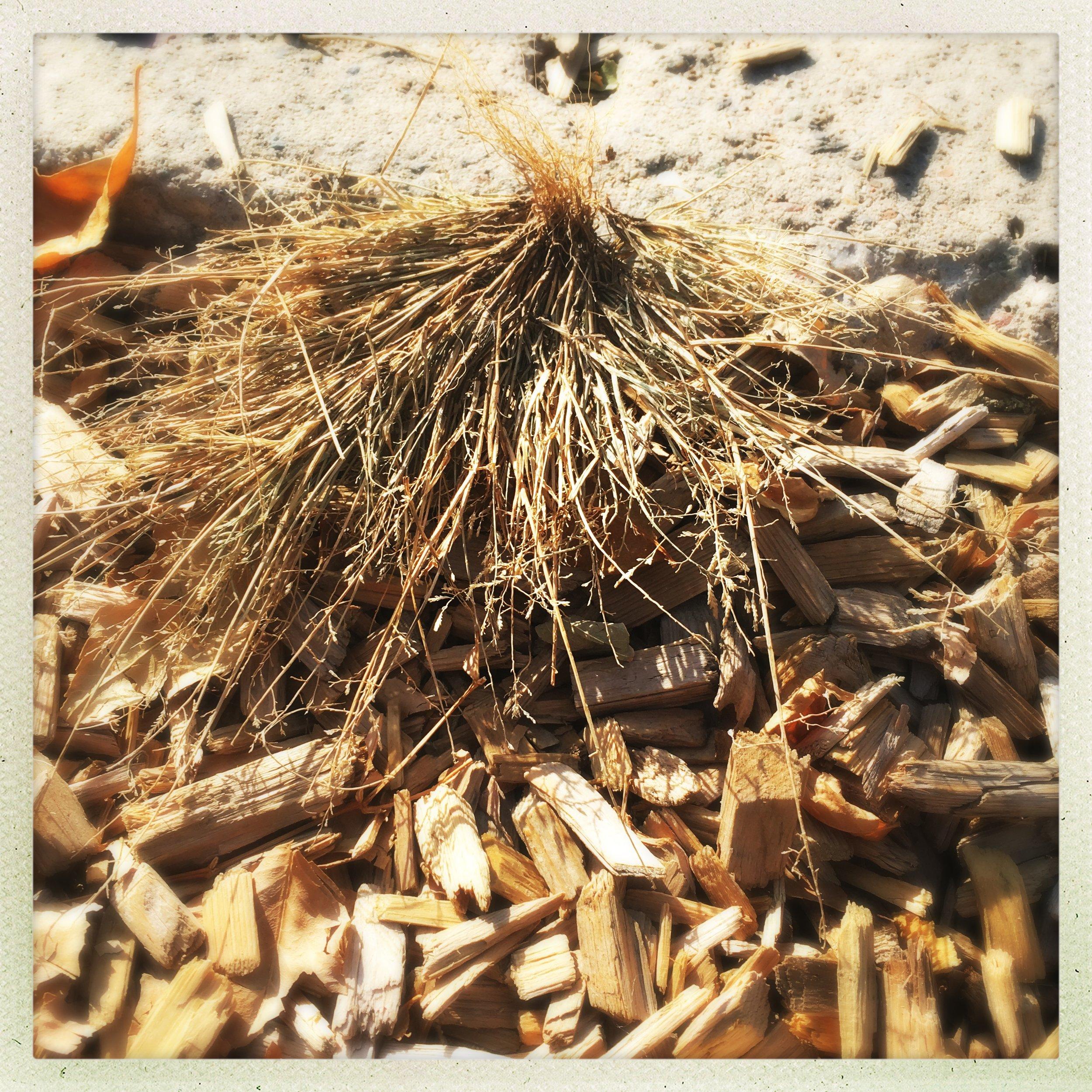the smallest haystack, lindsay gardens, slc