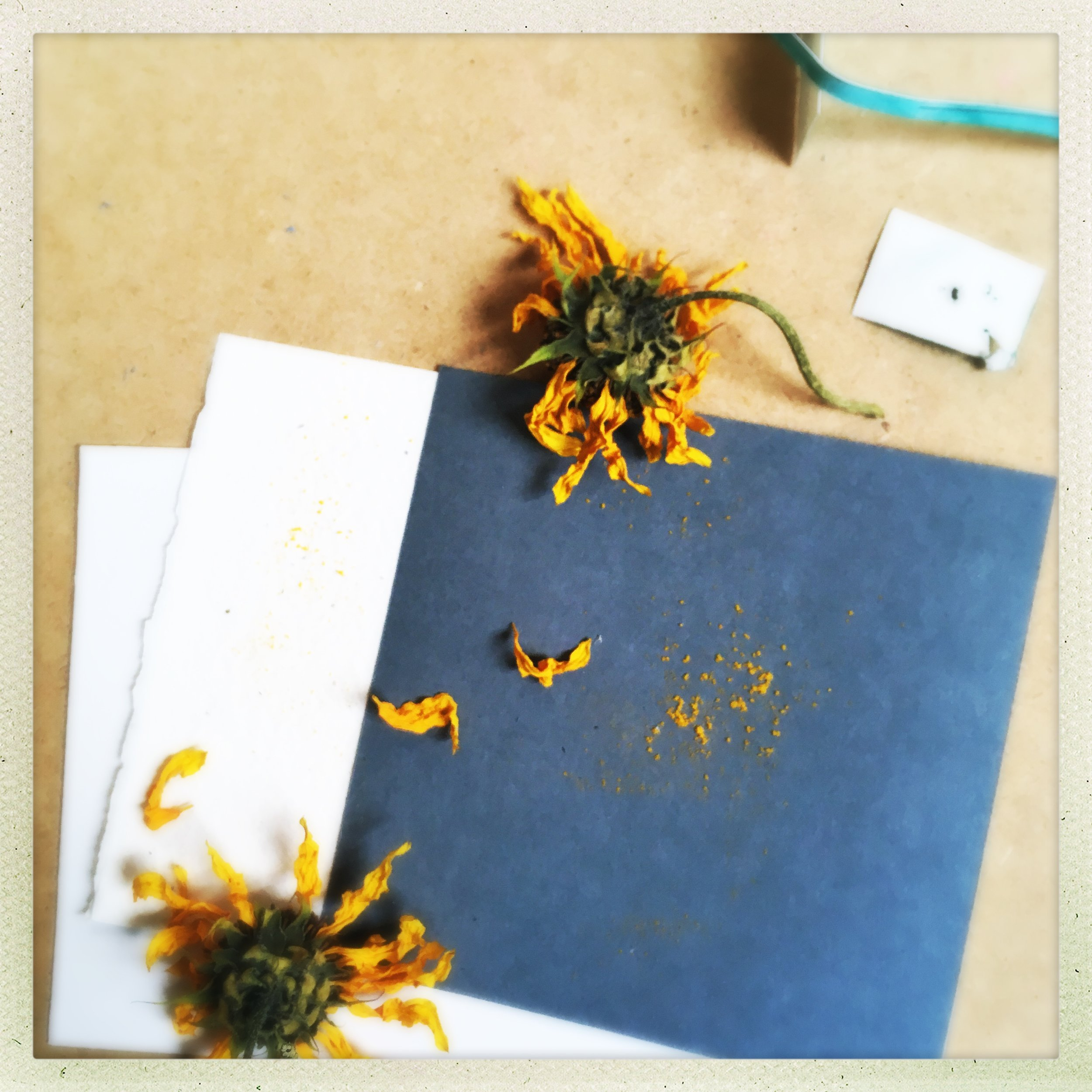 what is sacred, what deserves attention? pollen, discarded paper samples, sunflowers that lived only briefly indoors.