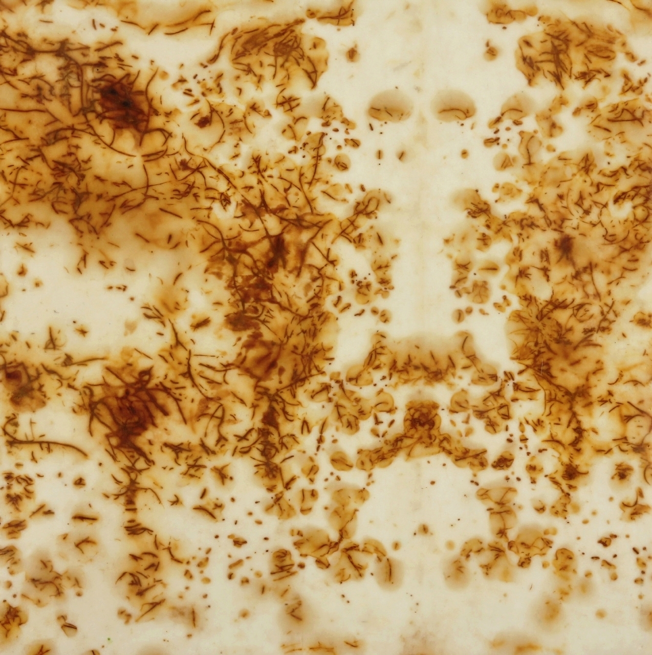 "Rust #28, 2013, Rust, encaustic on paper on panel, 12 x 12"""