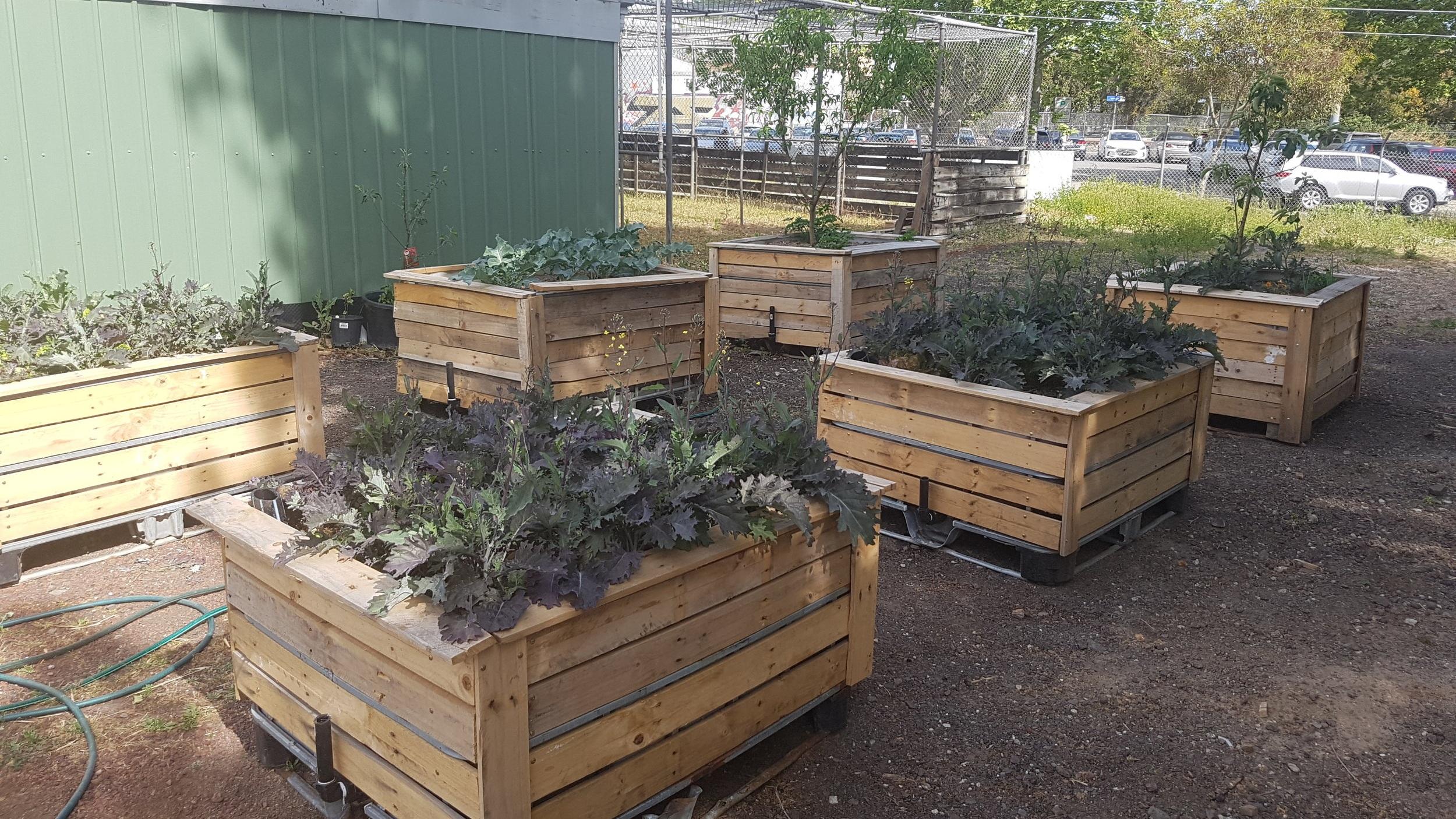 Food+Hub+image+of+veggie+gardens.jpg