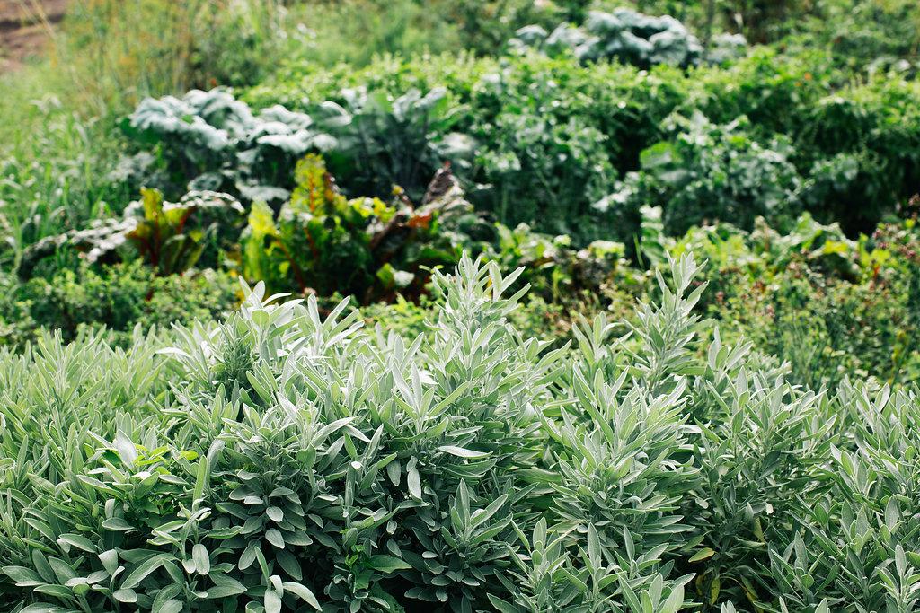 Farmhouse.Flowers_at_Mayneland.Farm-6974.jpg