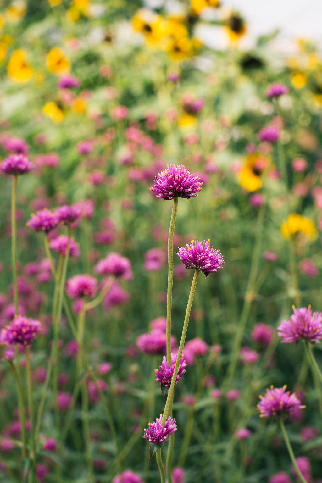 Farmhouse.Flowers_at_Mayneland.Farm-6967.jpg