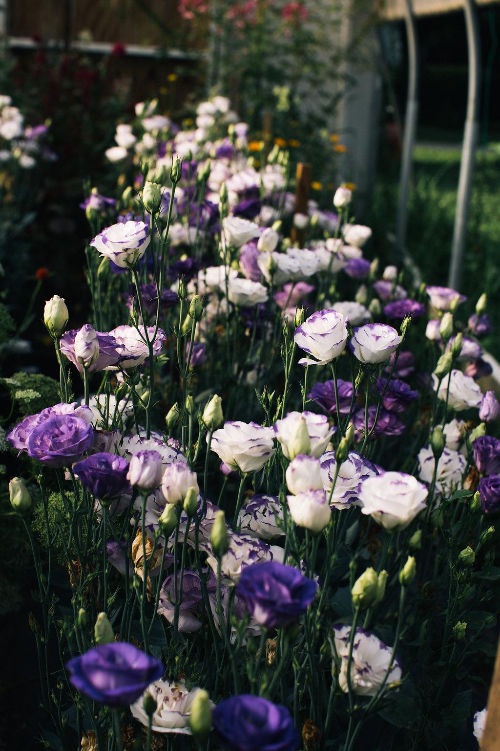Farmhouse.Flowers_at_Mayneland.Farm-6954.jpg