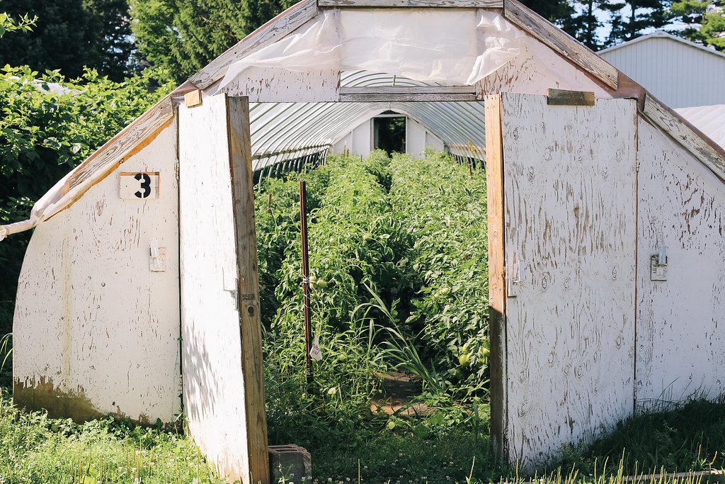 Farmhouse.Flowers_at_Mayneland.Farm-5769.jpg