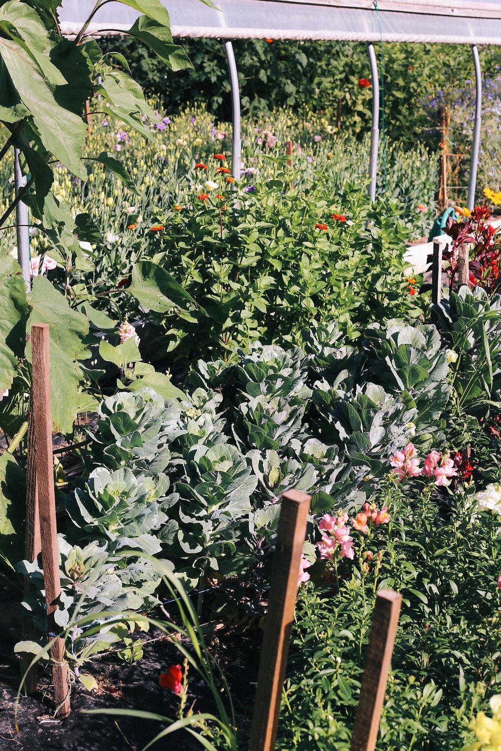 Farmhouse.Flowers_at_Mayneland.Farm-5756.jpg