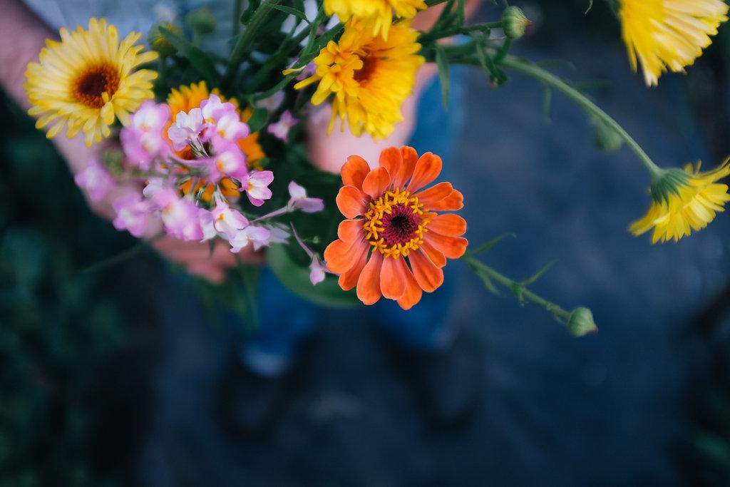 Farmhouse.Flowers_at_Mayneland.Farm-2550.jpg