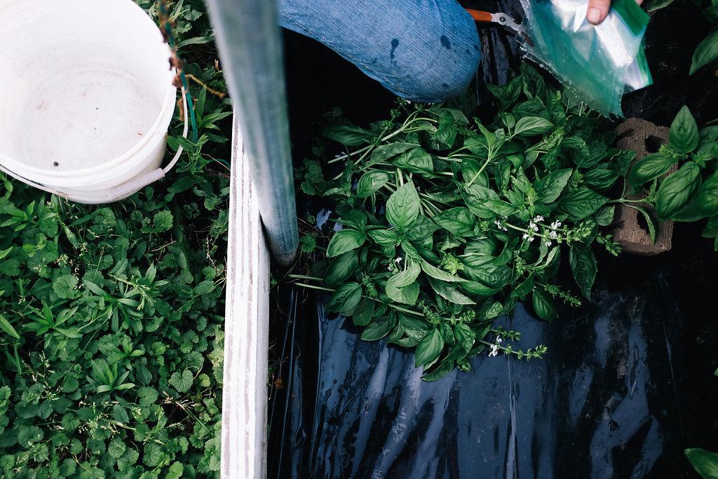 Farmhouse.Flowers_at_Mayneland.Farm-2540.jpg