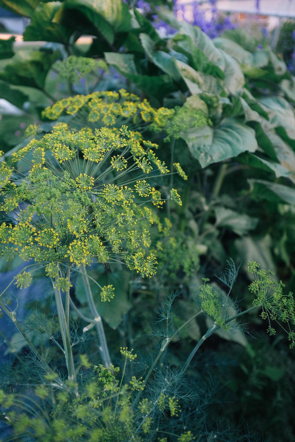 Farmhouse.Flowers_at_Mayneland.Farm-2537.jpg