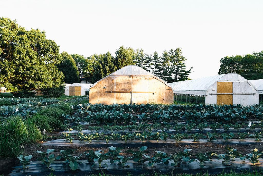 Farmhouse.Flowers_at_Mayneland.Farm-2514.jpg