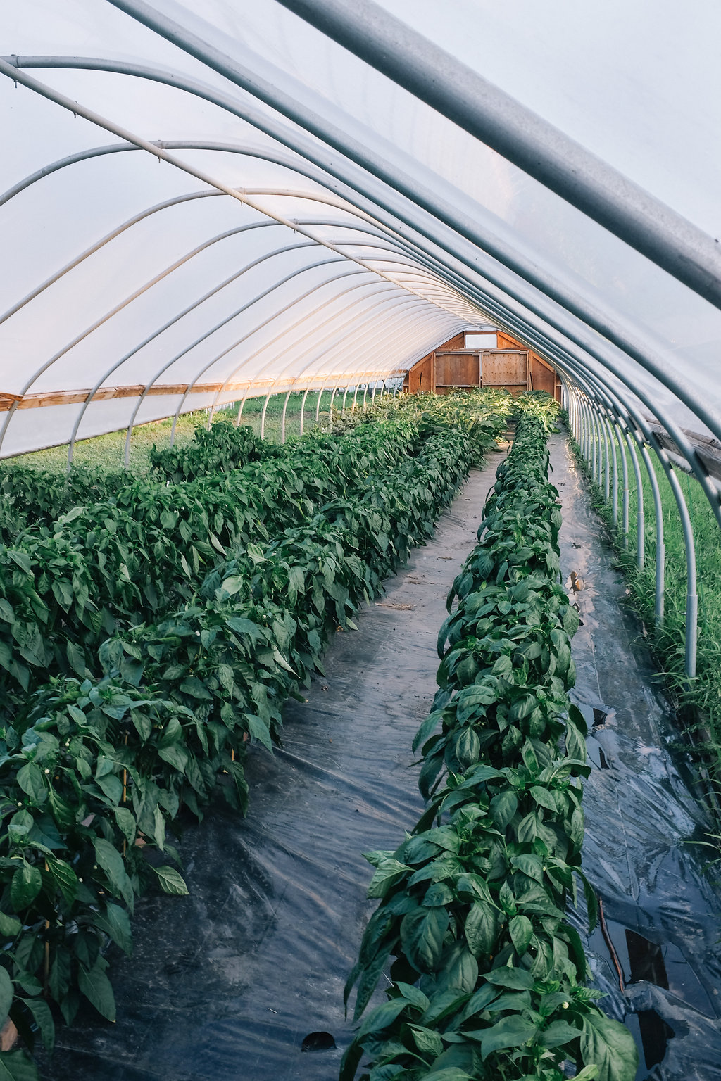 Farmhouse.Flowers_at_Mayneland.Farm-2508.jpg