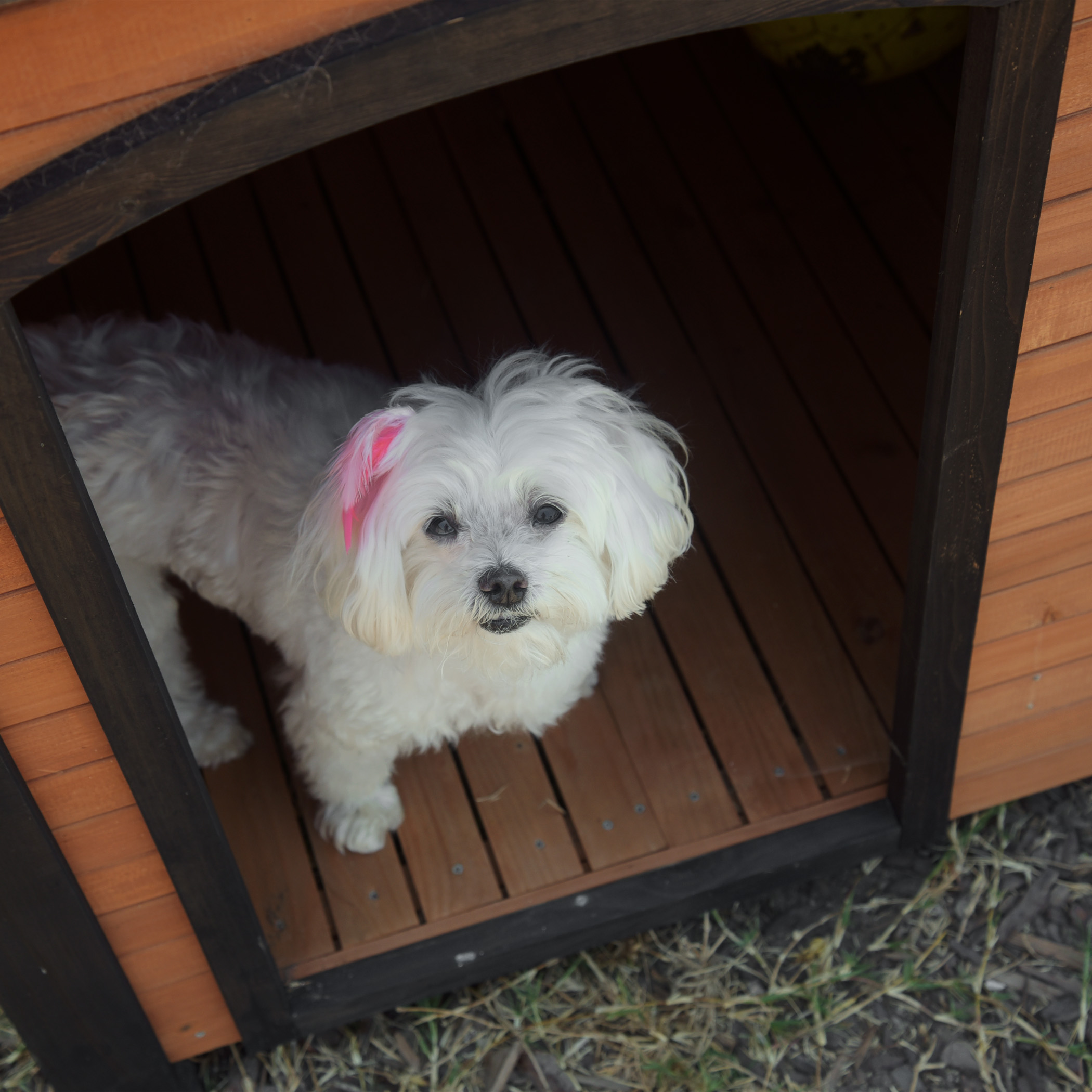 The house we are staying at has a hidey hole perfect for hiding from my pesky brothers! Now, it just needs some puffy pillows, a chandelier, some glitter and glam, and all the amenities fit for a princess! All pinks and purples, please! (If she only knew the size of the dog that owns that home!)