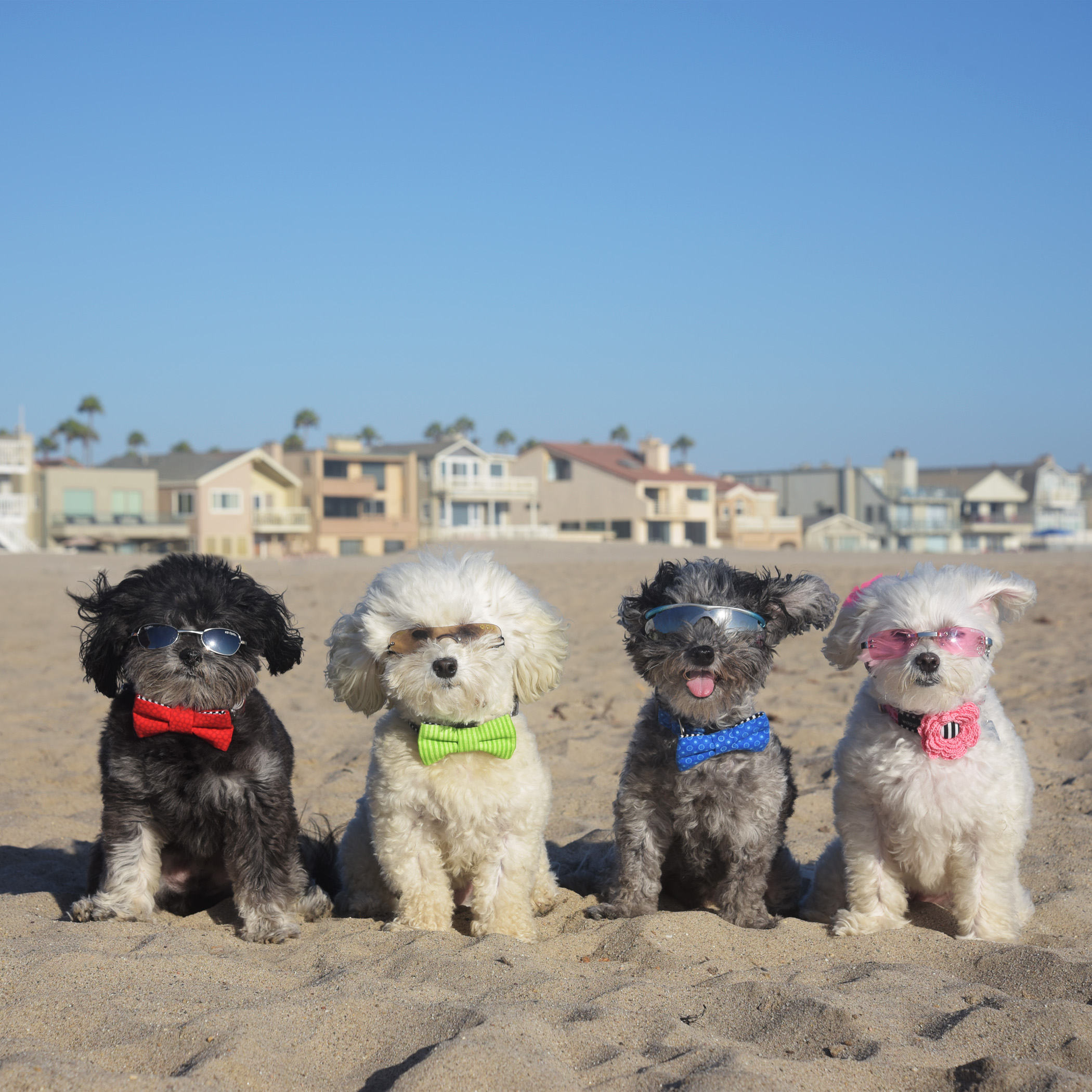 No visit to the beach would be complete without a beach modeling photo! We're wearing our favorite designer, Waggiwear.com.
