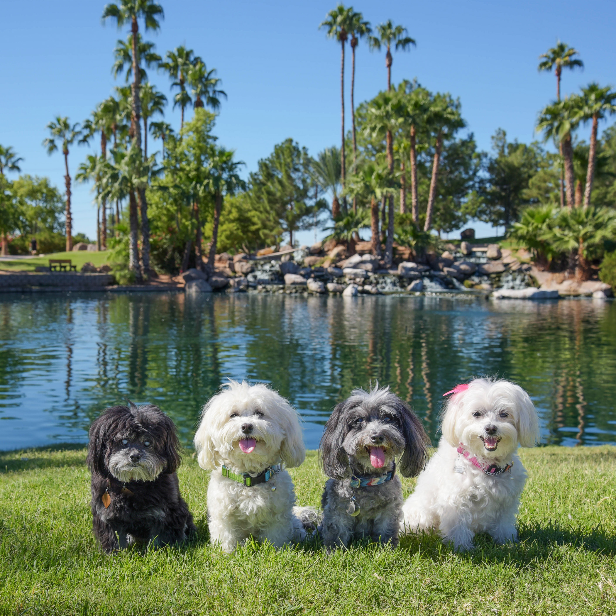 Doesn't it look like we are in paradise?!? We are so blessed to be able to experience such beauty and happiness! We wish and dream that every doggie in this big wide world will have the opportunity to experience something just as beautiful and be filled with as much joy for life and living as we have. Every day and every dollar gets us just a little closer to that dream…one day there will be a day when dogs and cats are no longer killed in shelters. Hugs and Kisses to all our supporters, donators and friends who want to see this dream become a reality!