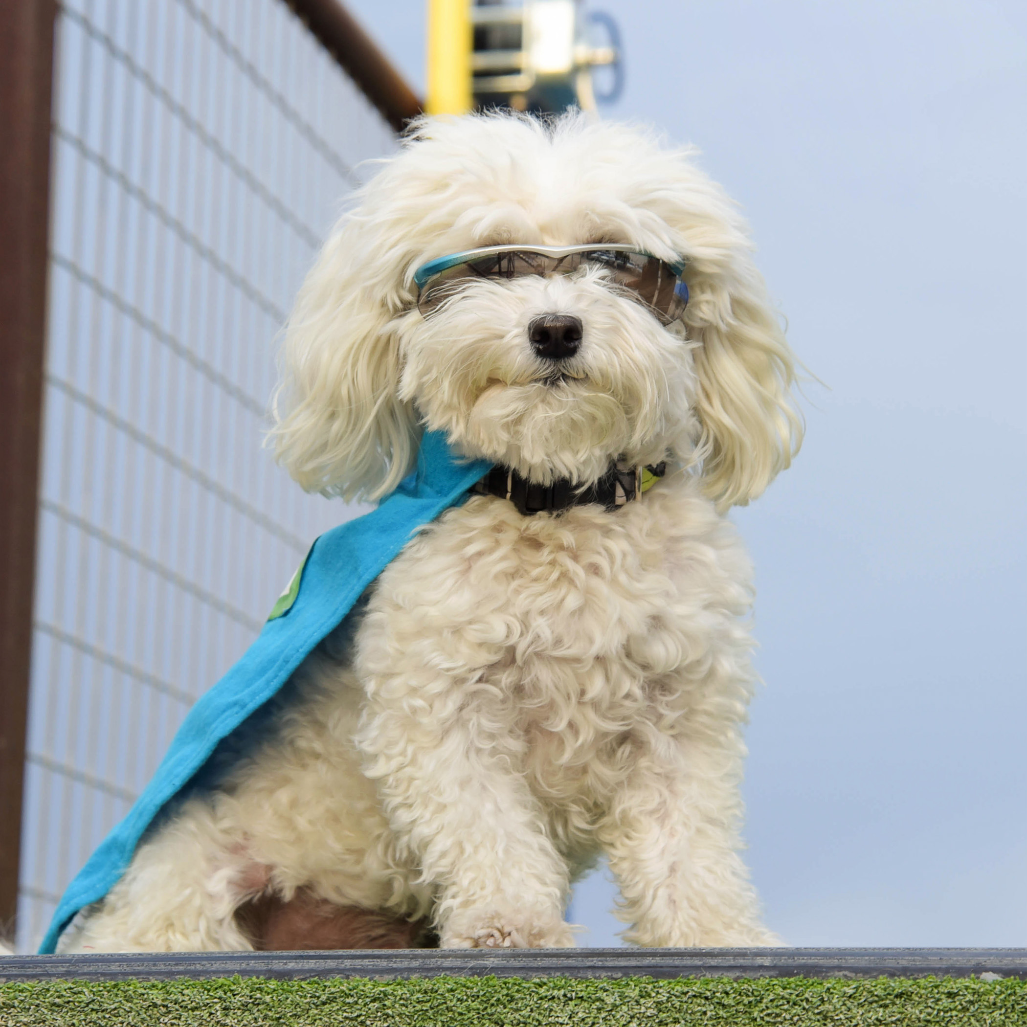I may be the smallest dog at the competition, but I am definitely the biggest when it comes to cool factor!