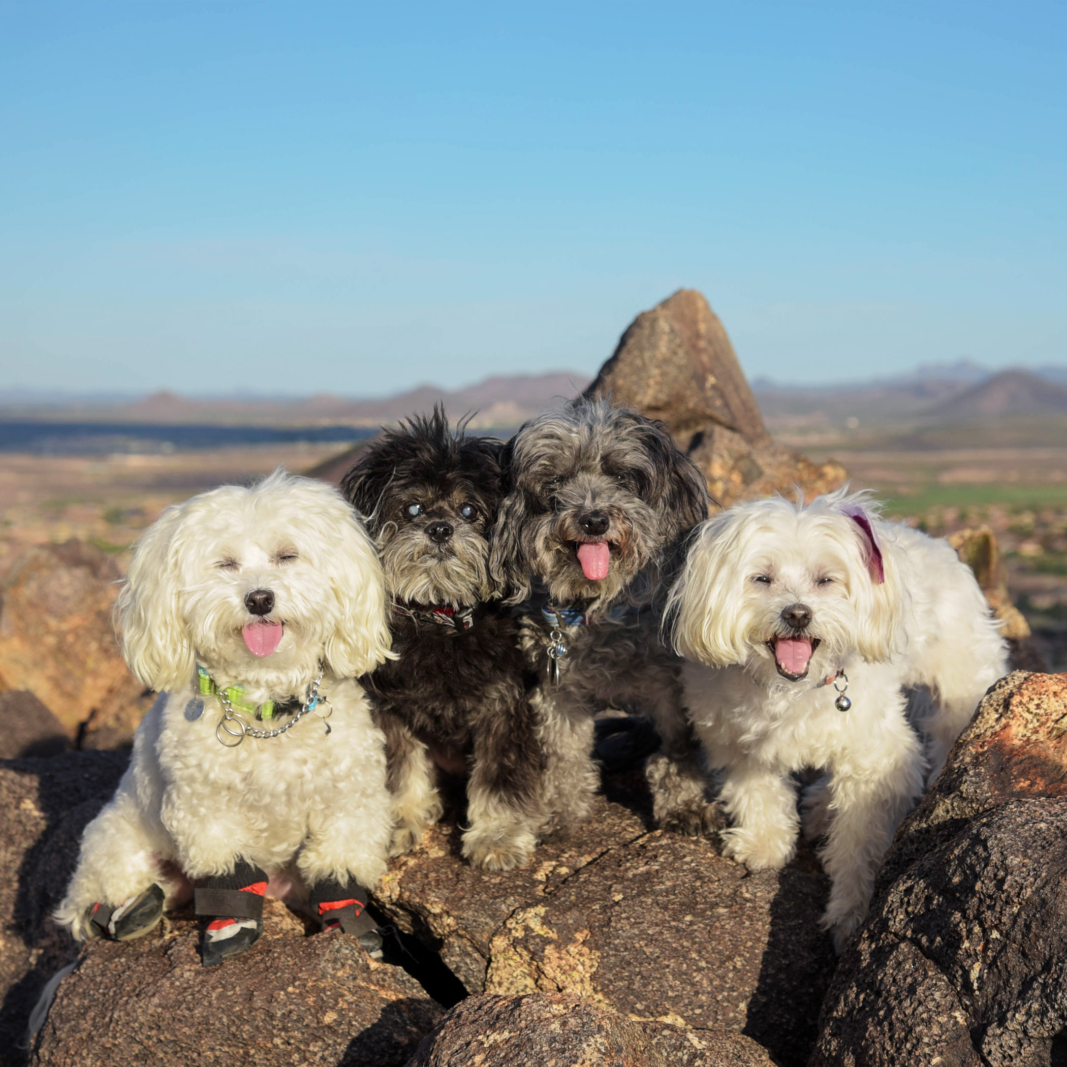 We made it to the top of Sunrise Mountain! That was a steep one…our little legs had to work really hard. What a view…worth every step!