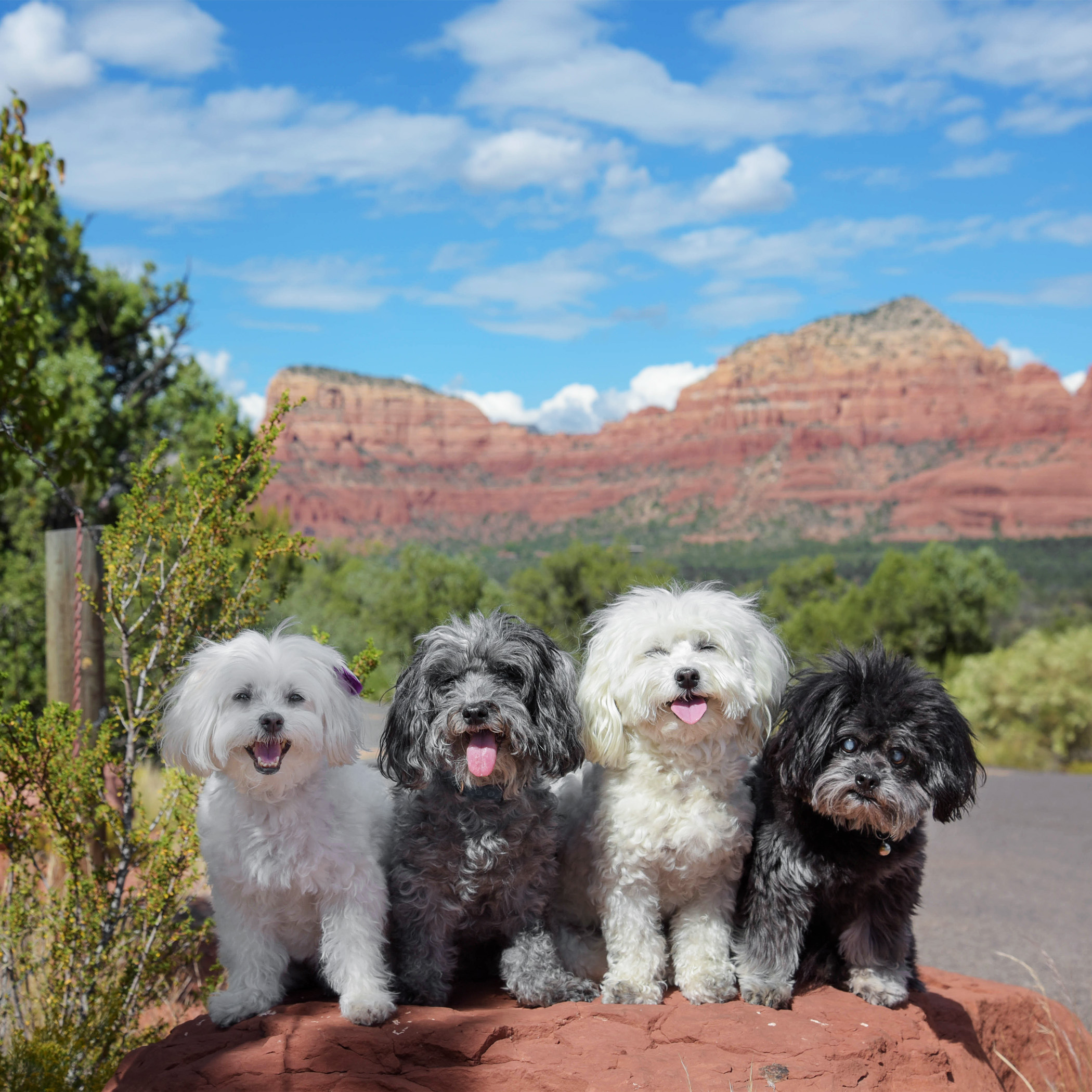 Having visitors is so fun, we get to explore places that we don't go to on a regular basis. Like Sedona, less than two hours away, but we have only been there a couple of times. Nothing like seeing the beautiful, red rocks of Sedona!