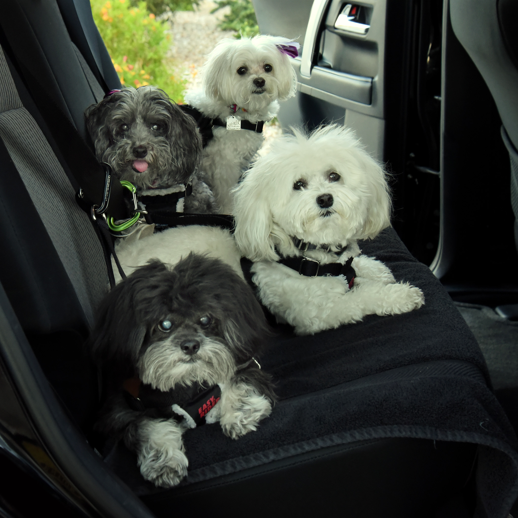 On the road, again, Mom?!? You & Dad can drive. We're beat…wake us when we get there!