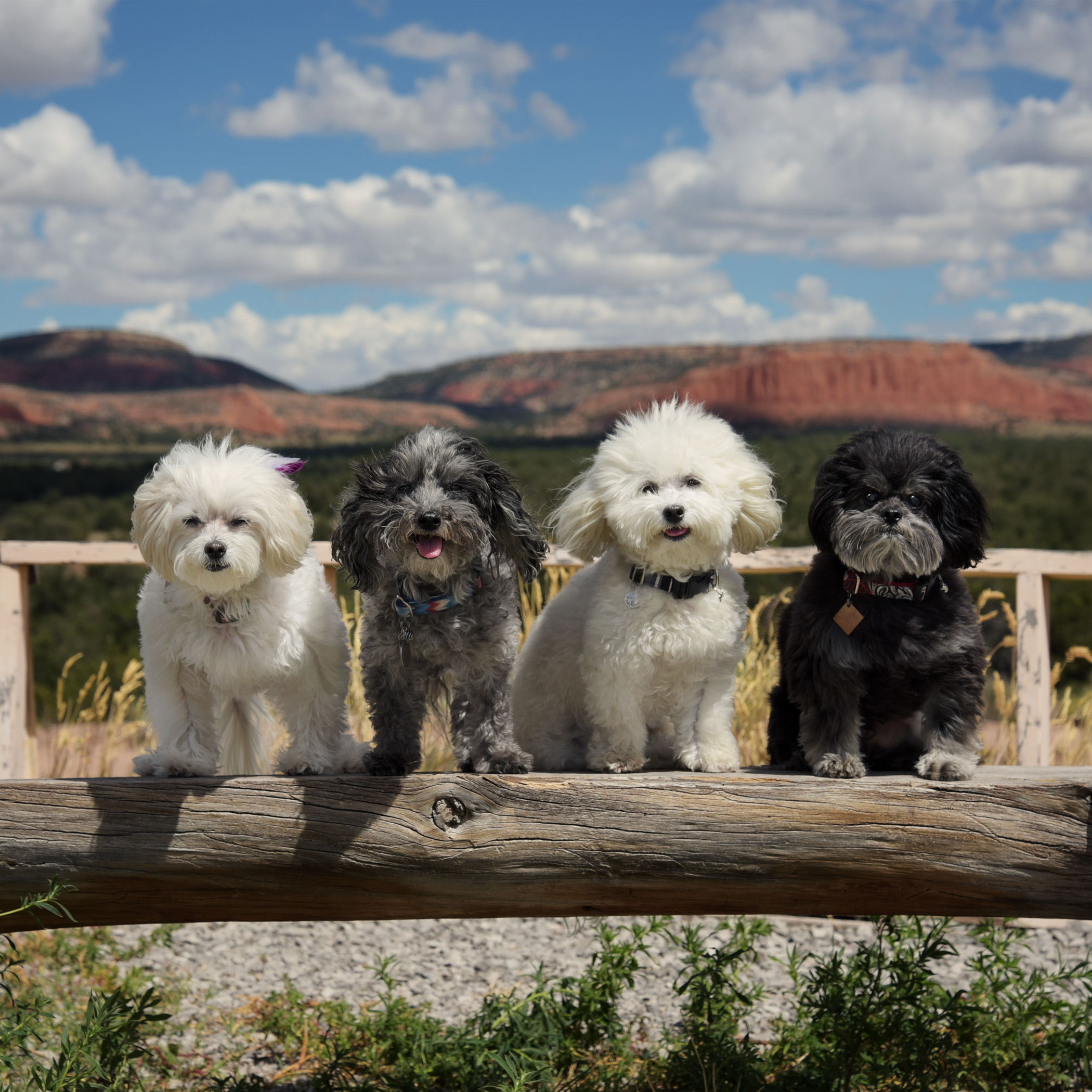 Here we are at the Continental Divide…we have no idea what it is, but we did get to leave our scent and got some treats out of the deal, so it must be a pretty cool thing!