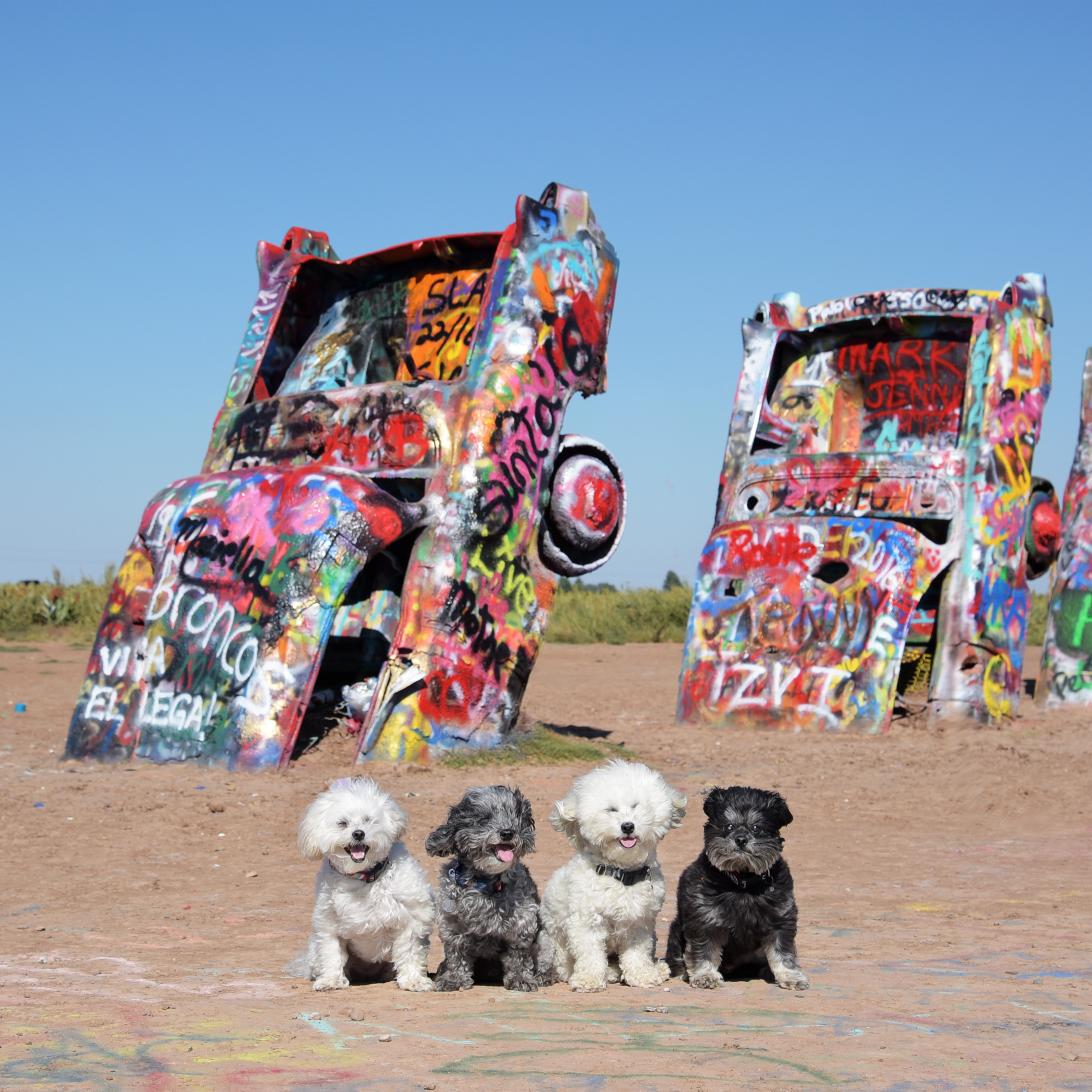 Just outside of Amarillo, Texas is Cadillac Ranch, a public art installation and sculpture. Various Cadillacs have been half buried, nose first in the ground. Writing graffiti or spray painting is actually encouraged, so every time you see the installation it will have a unique look. Mommy wouldn't let us spray paint, because she said we would probably just turn the spray paint on each other!